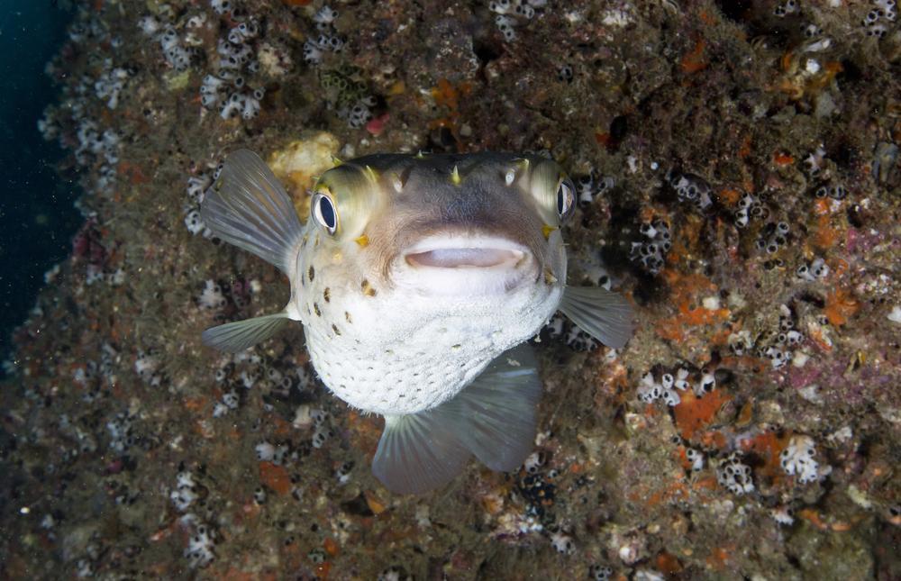 puhuva kala