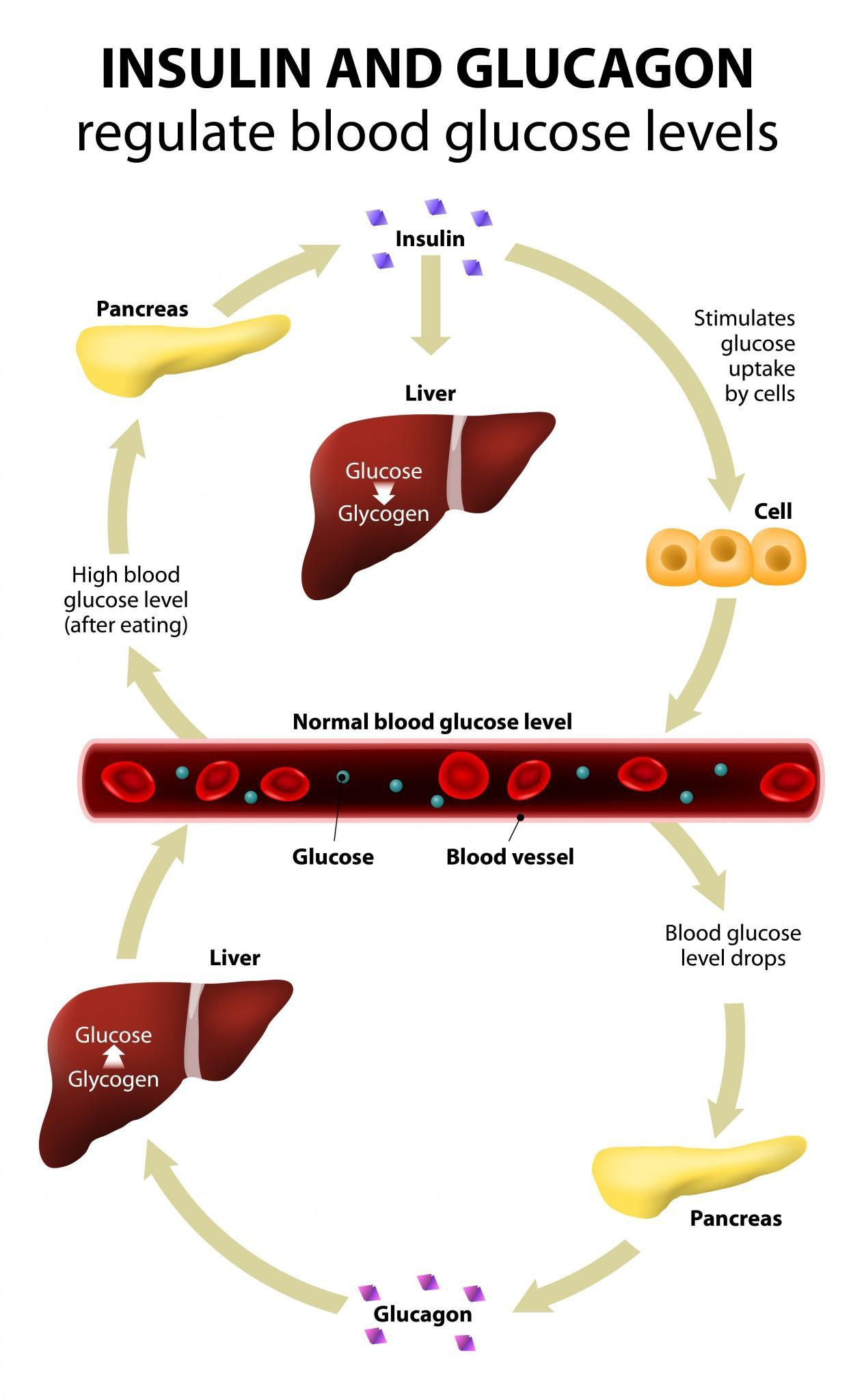 tasaisesta insuliinitasosta verenkierrossa